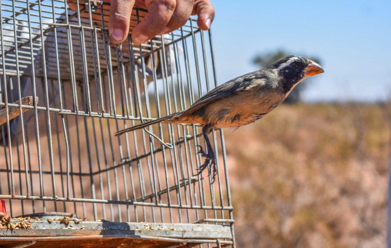 El Faunístico realizó una nueva liberación de Aves